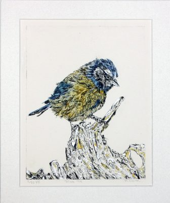 Blue Tit etching on a log, etching of blue tit ,dry point etching bird on log, colourful etching of blue tit on log