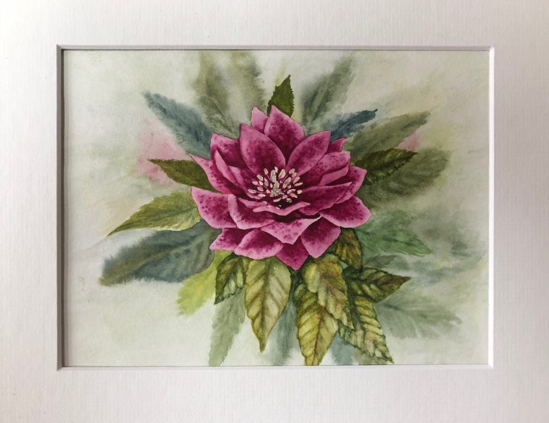 I am inspired by living things, particularly plants, although I occasionally branch out into the animal kingdom. My medium is watercolour, but I am learning to enjoy acrylics and pastels.