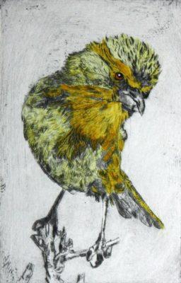 yellow canary bird on twig