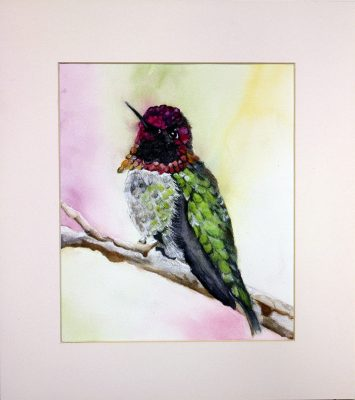 Humming Bird, Colourful, Watercolour, RSPB, Conservation, Wildlife