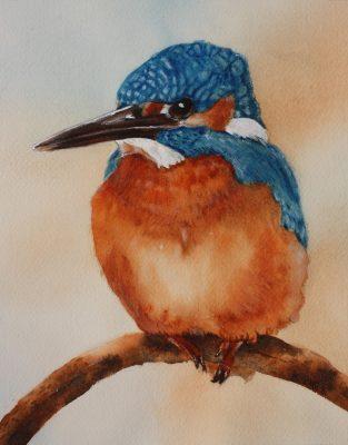 Birds, Wildlife, Conservation, Kingfisher, RSPB,