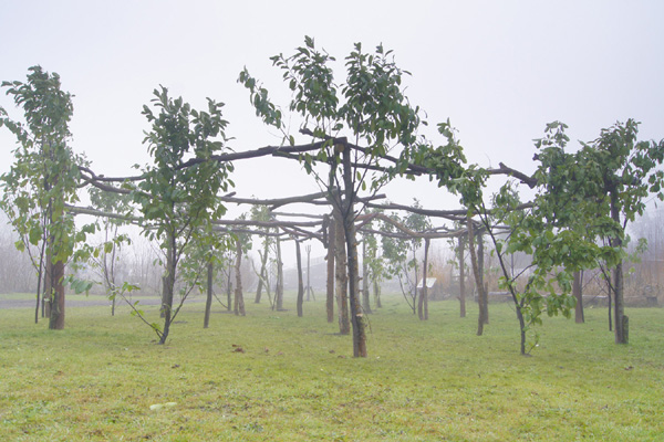 """A 'Sun Henge' at The Green Backyard, Peterborough has been built by a team of six over a weekend during December 2017. Made in time for the Winter Solstice on the 21st, the structure is made from branches supplied by local tree surgeons. Every day at noon, if the Sun is shining, the heel post 36ft to the South of the henge casts a shadow through the large southern 'Sun Gate' directly onto the central post.   Seen here in the mist of winter and decorated with Laurel from the perimeter bushes by LaurenKendrick and Rich Hill of the Green Backyard. Behind is Apex house in the centre of Peterborough. The Green Backyard is a communal garden space run by a board of trustees that despite greatly benefitting and serving the local comminity, is under constant threat of development.  [caption id=""""attachment_2395"""" align=""""alignright"""" width=""""200""""] Sea Plastic Torii Henge at the #PECTgreenfest 2016[/caption] Background: Torii doors from Shinto shrines are symbolic doorways passing from the mundane world to the spiritual world, literally translated torii equates to 'bird perch'. Here torii doors have been joined into circular structures evocative of henge monuments from Prehistory such as Stone Henge or Wood Henge.  Two such structures were made in the lead up to and for the Green Festival in Peterborough, August 2016. This build developed the 'Sea Plastic Torii Henge' as built in the Peterborough Cathedral precincts for the PECT Green Festival 2016. Build dimensions: The available space lent to a structure about 30ft diameter on mostly clear, roughly level ground most of the Torii-henge is some 7ft tall, the Sun Gate, an enlarged opening with extended rails positioned at 11am and 1pm using the sun on the 18th December as guide measures some 10ft high, The heel post is 36ft to the south.  [caption id=""""attachment_2389"""" align=""""alignnone"""" width=""""800""""] Midday sun floods through the Sun Gate of the wooden 'Torii Sun Henge' at the Green Backyard Peterborough 2017, photo: James Tovey[/cap"""