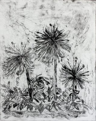 etching of dandelions